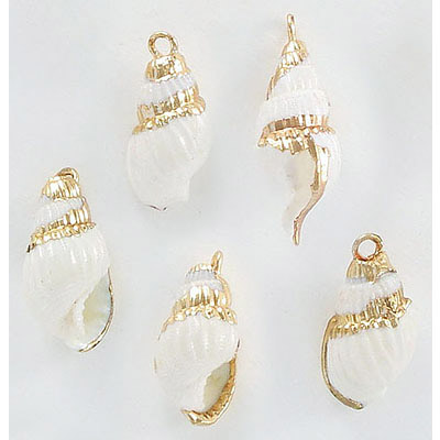 Semi-precious pendant, 18-23mm approx., shell, natural, with gold edge plating
